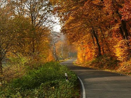 Von Birken gesäumte Allee im Vinxtbachtal zwischen Königsfeld und Waldorf, Herbst 2011