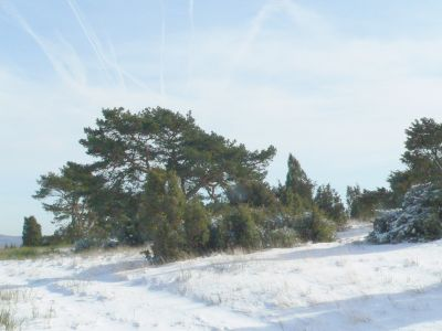 Heide im Winter